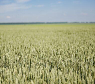 Аграрний лідер України